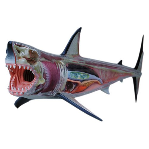 Skynet three-dimensional puzzle 4D VISION animal dissection No.02 Hohojiro shark Anatomy Model